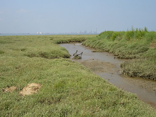 Saltmarsh below Motney Hill