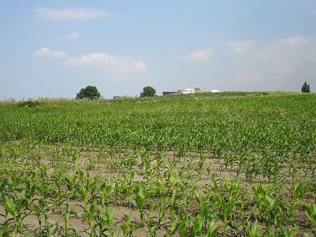 Maize and Sewage works, Motney Hill