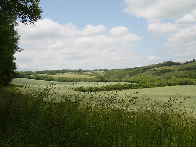 Wheat fields, Brockham Hill