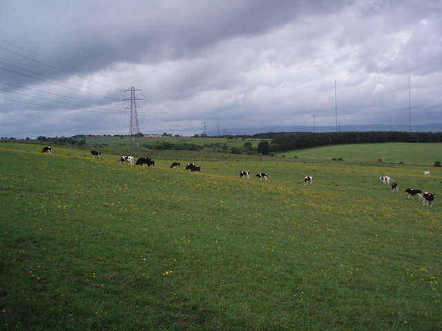 Marching pylons and cows!