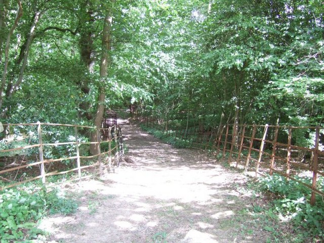 Bridleway through the Trees