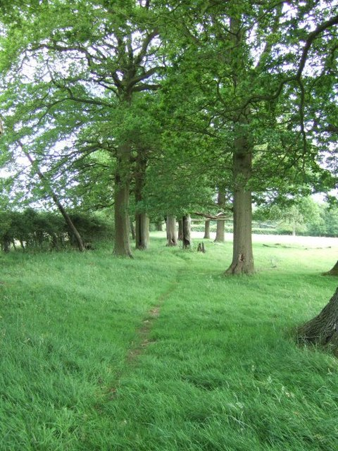 Footpath through the Trees