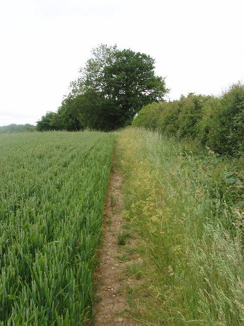 Wheat field, Chesham Vale