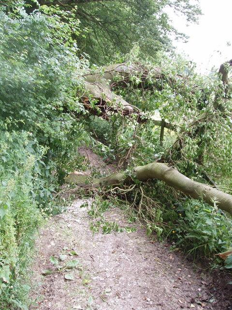 Fallen tree blocking track, Chesham Vale
