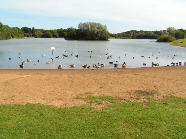 Geese on Barden Lake, Haysden Country Park