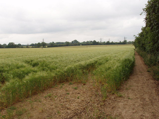 Barley Field, near Chesham