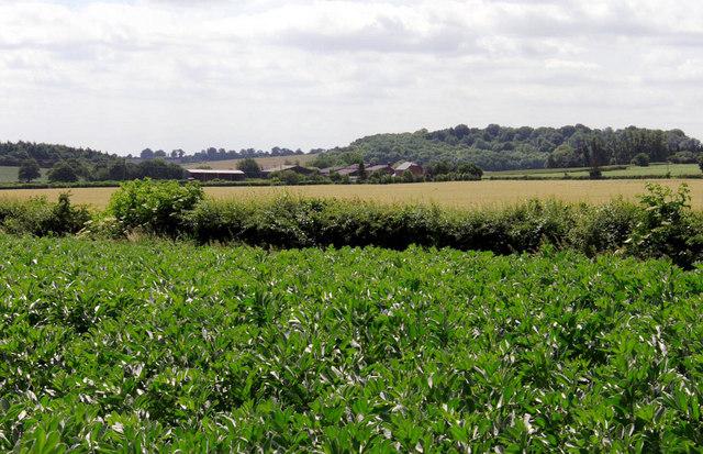 Lilly Bottom Farm