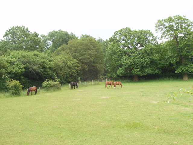 Paddock with horses, by Berkhamsted Common