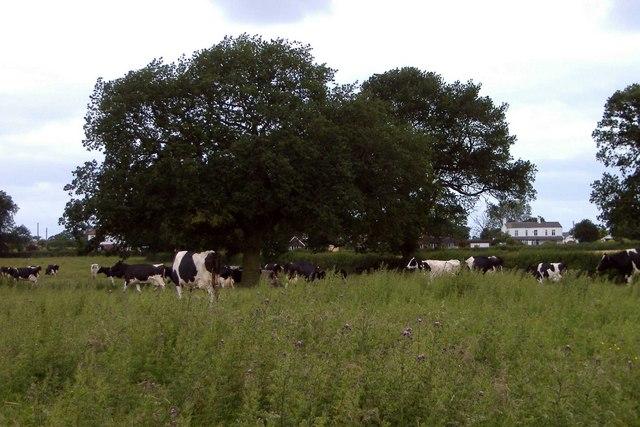 Kinsey Heath pasture