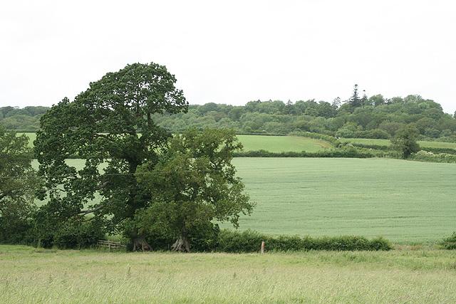 Huntsham: near Perrott's Farm