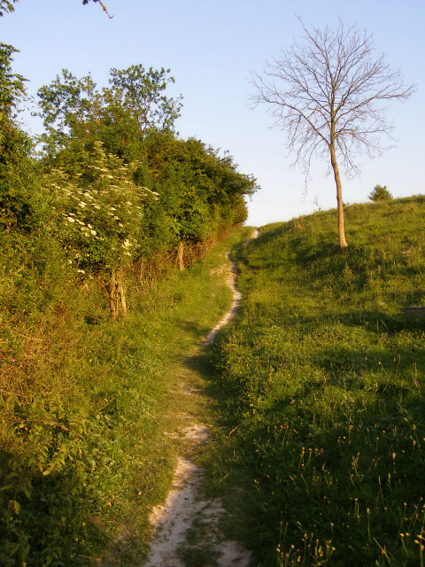 Pilgrims Trail on Twyford Down
