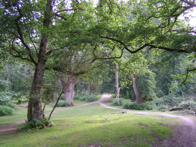 Well-worn path through Matley Wood, New Forest