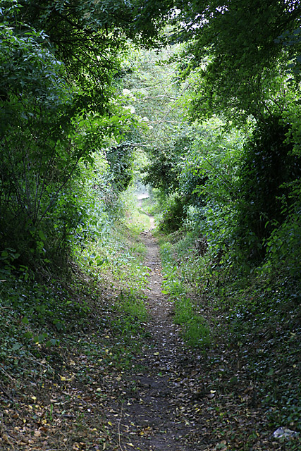 Salterton to Hurdcott footpath as it descends into Hurdcott