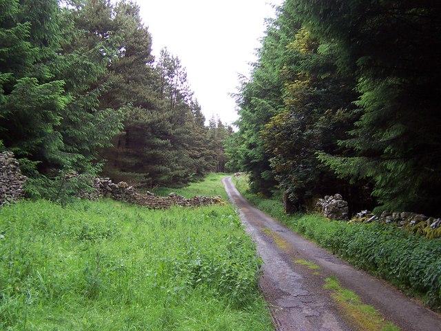 Plantation on Snaizeholme Pasture