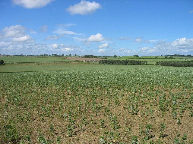 Farmland looking towards North Dunslawholm Farm