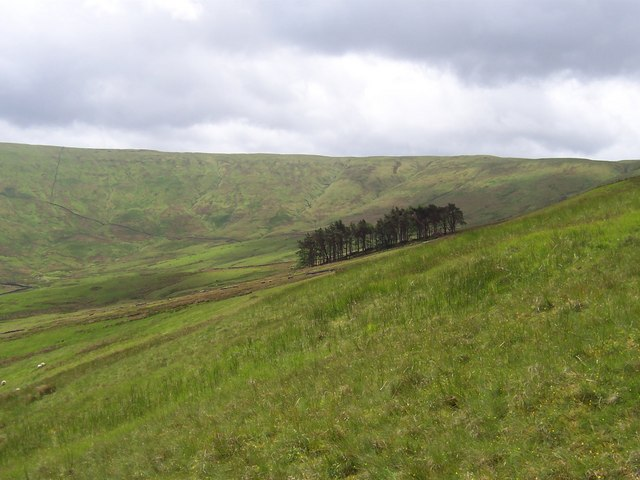 Isolated Plantation and Grove Head