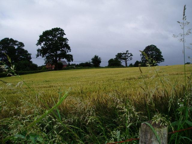 Farmland near Painter's Green