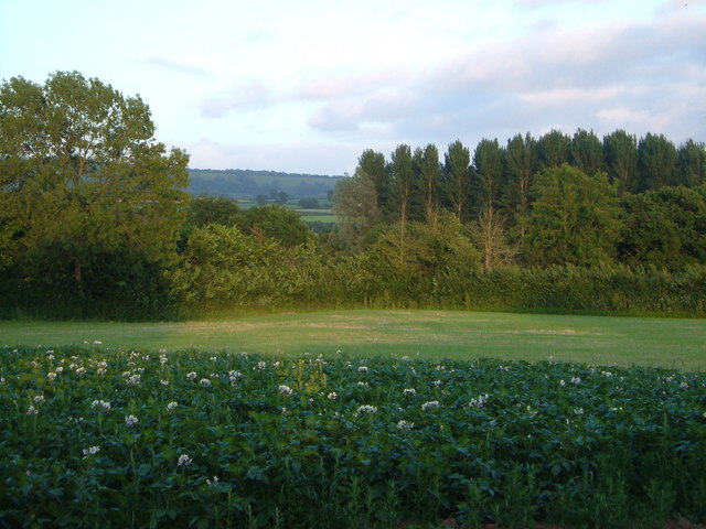 Potato patch at Sowton Farm