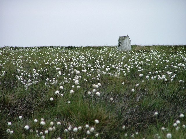 Trig. Point and Cottongrass, Loose Howe
