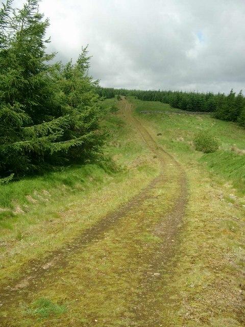 Forestry track in Glentaggart