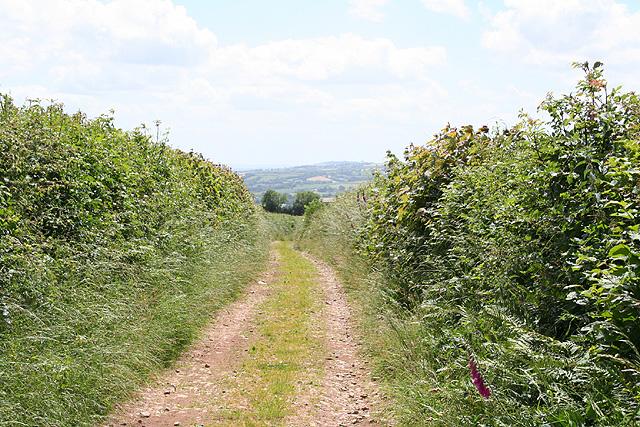 Tiverton: bridleway to Gogwell