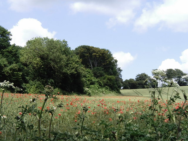 View from North Downs Way between Lenham and Charing