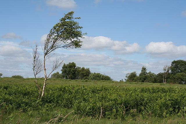 Witheridge: Witheridge Moor