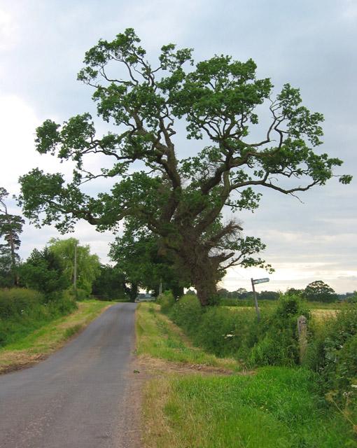 Leaning tree, Holtridge