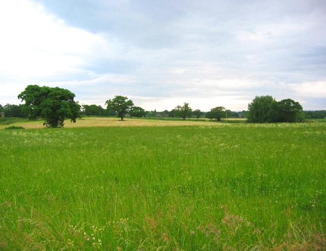 Fallow field, Holtridge