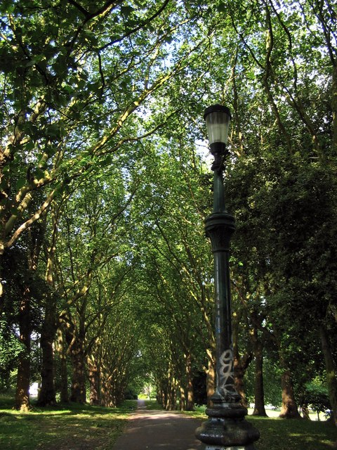 Tree lined avenue in St. George Park
