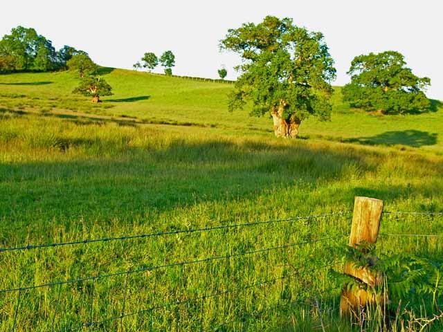Parkland above Dan y Parc