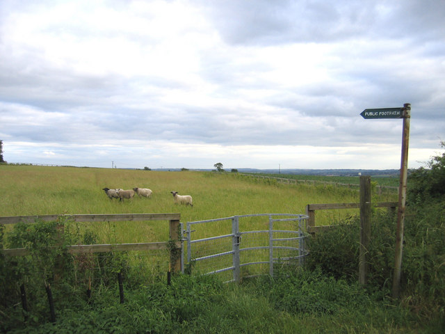 Sheep on the footpath, Maulden, Beds