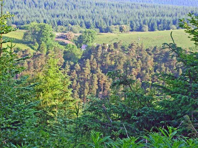 Esgair-fwyog, Crychan Forest