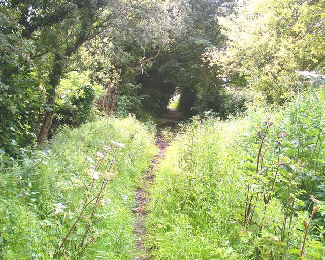Pingard's Lane, Near Ruloe