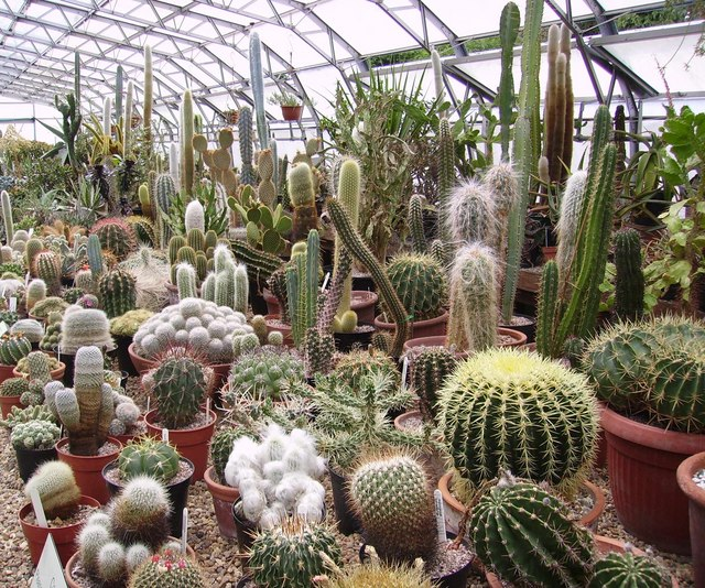 Cacti ,Chester Zoo