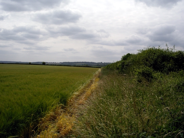 Field and hedge by the B3084