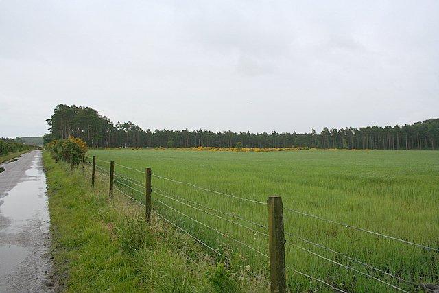 Towards Torrieston wood.
