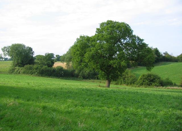 Farmland by the River Weaver