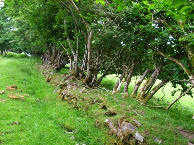 Wall and trees near Rhiwiau
