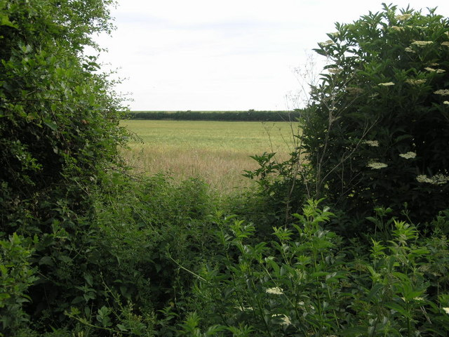 Field Through the Hedge