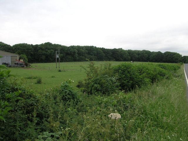 Nitticarhill Wood
