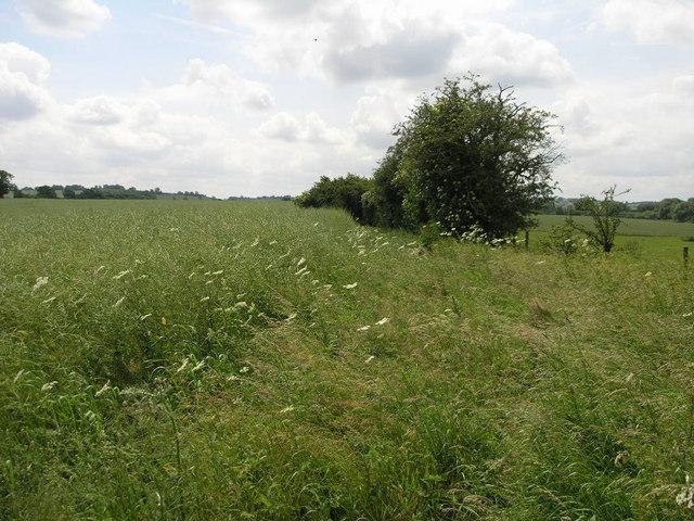 Bridleway to Danes Moor