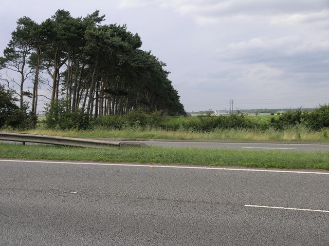 A1 and Trees