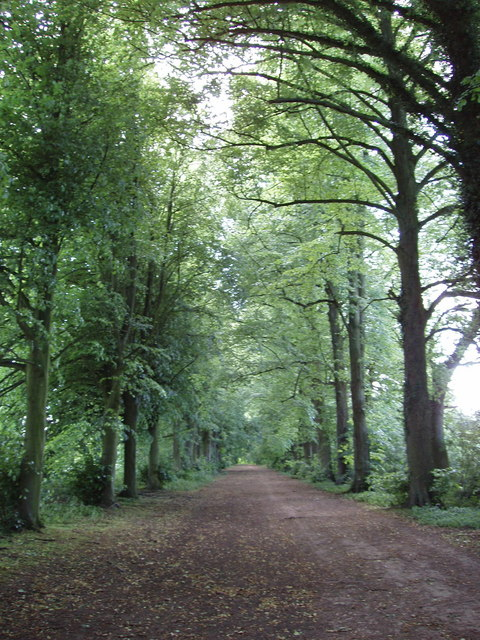 Tree-lined avenue to Shotover House