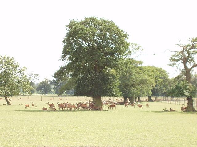Deer farm,  Nuneham Courtenay