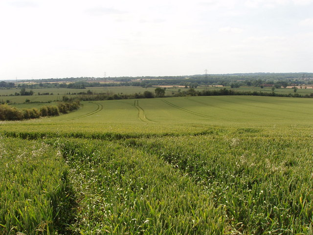 Wheat field, Nuneham Courtenay