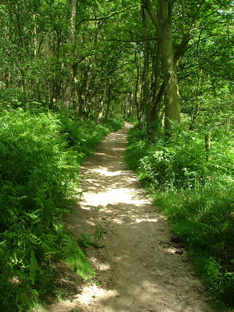 Path up through Whitley Wood