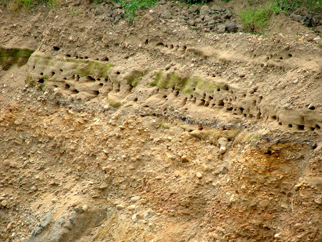 Sand Martin Nests in the face of Gravel Workings