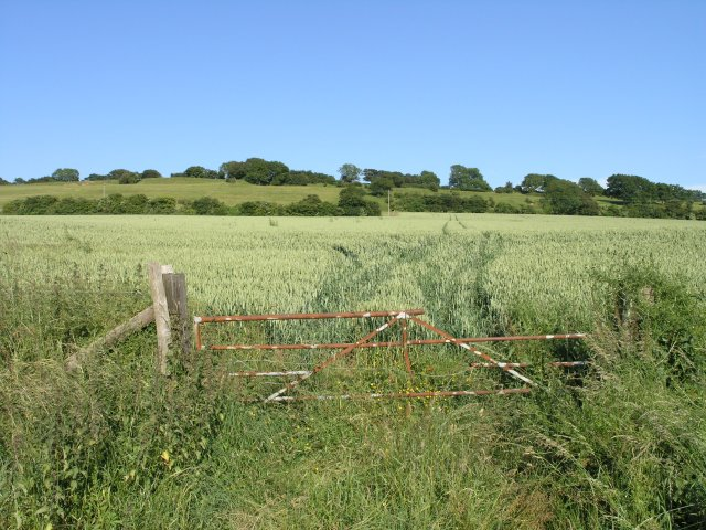 Fields of wheat, south of Wingmore