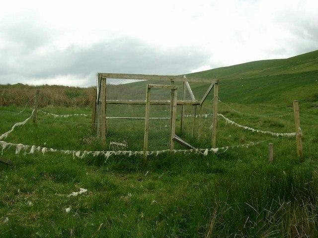 Crow trap above Snar Farm